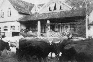1960 (década) – Tropas de Gado no Centro da Cidade